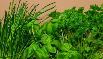 3 причины теперь есть зелень каждый день